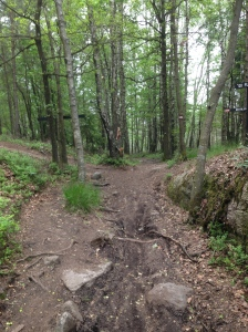 A pretty piece of trail in Skatås.