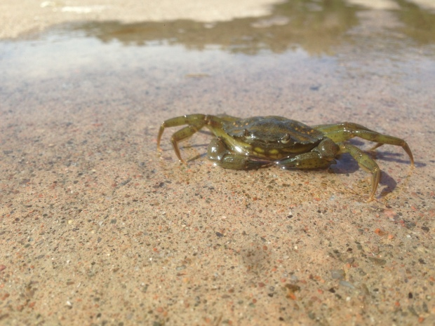 We even had time to catch some crabs, small as they were.
